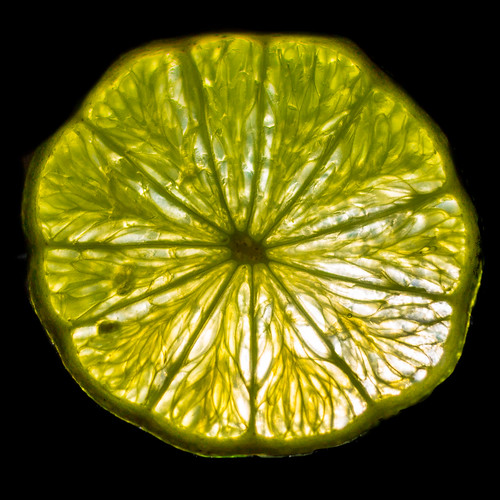 Backlit slice of lime.....   135-365
