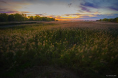 Sunset On The Wetlands. LaSalle, ON. (Pat86) Tags: photooftheday lasalle petitecote wetlands sunset sky