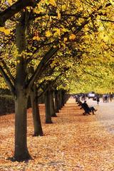 Photo of Autumn in Regents Park-9