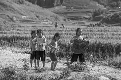 De vuelta (agustn hdez) Tags: vietnam sapa