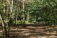 Speechhouse Path-0521 (WendyCoops224) Tags: 24105mml 600d forestofdean speechhouse canon eos ©wendycooper