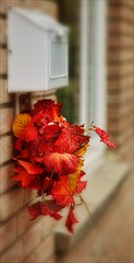 Our Daily Challenge: Warm Colours (Sue90ca Glorious Autumn) Tags: canon 6d odc warm colours autumn leaves