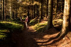 Offa's Dyke Path Days 10-12 (34) (ChrisJS2) Tags: worldsendwoods offasdykepath offasdyke walkingoffasdykepath outdoors clwydianrange offasdykepathnorth