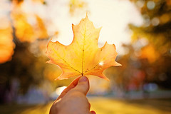People who are intimated by you talk bad about you with the hopes that others won't find you so appealing. (Sandra H-K) Tags: autumn autumnleaves leaf bokeh bokehlicious hand holding nature outside outdoors october orange golden goldenhour sunshine sunny bright dof