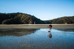 IMG_3645 (Schlueter1992) Tags: neuseeland2016urlaub abeltasmannationalpark tasman neuseeland
