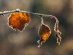 Autumn (Fjllkantsbon) Tags: doroteakommun evamrtensson hgland lappland platser sverige vder rimfrost evamrtensson hgland vder vsterbottensln