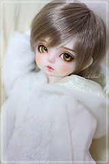Rocco (kirie0746) Tags: rosenlied momo