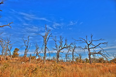 (yosmama151) Tags: wmwr wichitamountainswildliferefuge wichitamountains lawton oklahoma landscape autumn oklahomalandscape prairie field plain greatplains tree trees hdr highdynamicrange