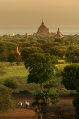 Morning Graza (peter stewart photography) Tags: bagan myanmar burma morning dawn haze field aerial farmer working cow travel tourism copy space asia temple horizon
