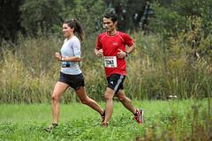 Hallwilerseelauf: 10 Kilometer-Lauf
