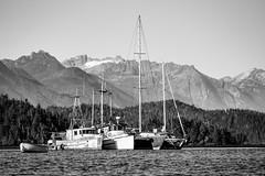 Tofino, BC (Seth GaleWyrick) Tags: olympus omd em5 panasonic100400 tofino bc canada ocean boats water mountains blackandwhite bw mono monochrome