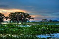 Tissa Lake /   (Kochum) Tags: nikon nikkor1870 1870 d90 srilanka tissa lake trees water swamp hdr sky sunset cloudsstormssunsetssunrises clouds