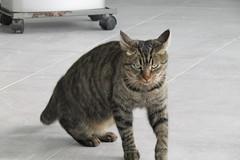 What do you think you're doing? (*SHERWOOD*) Tags: france vende larochesuryon home veranda cat timinou nibble