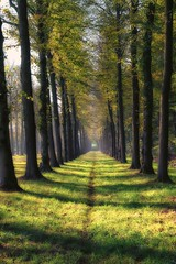 One man track... (ParadoX_Design) Tags: baarn soestdijk palace path trees autumn fall grass sunlight netherlands utecht utrecht