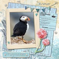 Skomer (tina777) Tags: skomer island puffin bird flower bunting wildlife trust dale sailing pembrokeshire south west wales serif craftartist 2