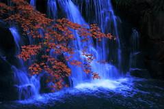 In the autumn (tsuntsun3) Tags: kanagawa japan autumn red colored fall maple 301a1512 waterfall japanesemaple