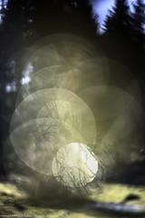 Lichen charts (DONATURA) Tags: agua aguas drop eau eaux element elemente elemento flechte fotografia fotografie gota goutte lichen liquen lumirenaturelle macro makro natur natura naturallight naturalluz nature naturlicheslicht pflanz pflanzen photographie photography plant planta plantas plante plantes plants sol soleil sunsonne troft wasser wassern water waters lment