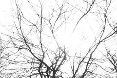 IMGL8903 (harleyxxl) Tags: wien lobau winter morgenstimmung baum äste zweige gegenlicht