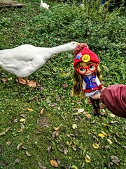 Blythe-Attacke oder Gans-Attacke; Blythe attack or goose attack