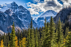 K56A9807-Edit (paulaf55) Tags: canada canadianrockies lakelouise larch larchtrees mountains trees