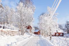 Beautiful winter day. (BirgittaSjostedt) Tags: winter house village road tree fence sun cold beauty birgittasjostedt snow landscape outdoor ie