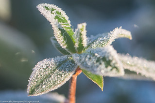 more frozen leaves
