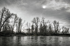 Fade into You (rowjimmy76) Tags: november autumn pacificnorthwest washington yakima overcast river greenbelt walking outdoors nature trees weather clouds landscape bw canon sigma18250mmf3563dcmacrooshsm faded muted