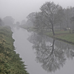 Misty Reflections (me'nthedogs) Tags: somerset levels drain trees reflection