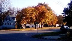 Beautiful Autumn Memories! (Maenette1) Tags: autumn trees neighborhood street houses menominee uppermichigan flicker365