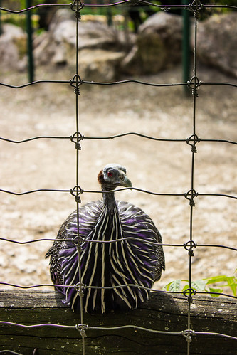 behind-the-fence_23921853112_o