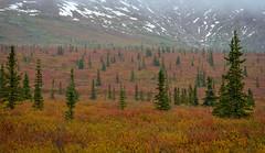 Colors of Alaska (Waldemar*) Tags: alaska denali nationalpark tundra fall autumn foliage season colors landscape nature scenic scenery outdoor