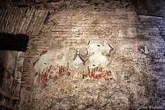 1384 (Ester Vulpiani Photographer) Tags: foro romano palatino roman forum palatine hill roma rome ancient art history arte storia rabbit colosseum santa maria antiqua angel ruins templum tempio venere bird fauna colosseo walking passeggiata sunset sunny day canon eos 550d