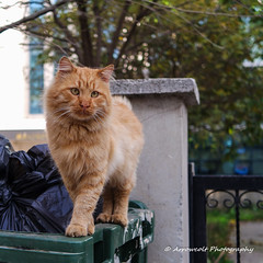 Cat 25 (`ARroWCoLT) Tags: cat catstagram nxmini 17mm straycat litter bokeh dof depthoffield squarecrop samsung streetphotography sokak kedi sokakkedisi sarman