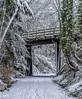 Bridge (Paul Rioux) Tags: nature winter snow season seasonal bridge trail gallopinggoose path prioux canon 6d outdoor scenic colwood westshore