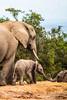 Protection. (Nona P.) Tags: safari afriquedusud wildlife girafe éléphant sauvage brousse animal canon photography nonap