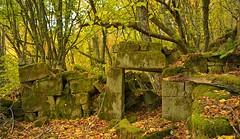 Green Wall (thoskar) Tags: green wall invasion ruina ruins abandonado abandoned naturaleza nature landscape verde burgos nikon d3300 color