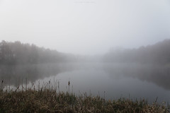 (esmeecadoni) Tags: woods water europe netherlands trees tree sony outdoor autumn simple simplicity minimal light littlethings minimalistic mist holland morning fog forest photography landscape lake fall drenthe nature