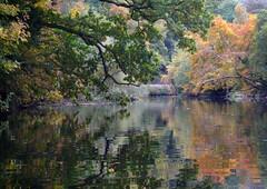 Kayak Dart Rob 12 (chris-parker) Tags: kayak river dart canoe kayaking canoeing devon south west perception
