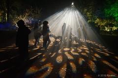 DSC04238 (Westlarj Street) Tags: 2016 aboretum bpw enchanted forest westonbirt gloucestershire england night handheld