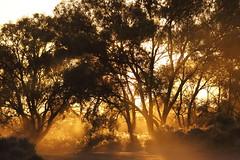 2016.11.17.05.29.34-Lake Drive sunrise (www.davidmolloyphotography.com) Tags: newsouthwales menindee kinchega kincheganationalpark