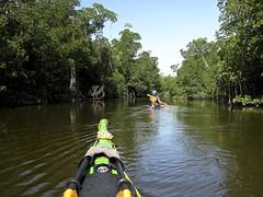 "Entering ""The Nightmare,"" a long, twisty mangrove tunnel (pat.pix) Tags: florida mangrove kayaking evergladesnationalpark photostream thenightmare mangrovetunnel fcspt"
