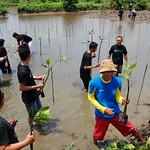 Planting Mangrove thumbnail