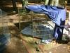 GreyhoundPlanetDay2008017