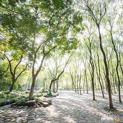 Lindgrn (Lime Green) - Hangzhou (Andy Brandl (PhotonMix.com)) Tags: lindgrn green fresh pure square trees nature gepflegt park hangzhou zhejiang cultivated limegreen nikon d800 photonmix bltterdach canopy growth development rocks sunlight bright