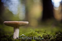 Mushrooms are back! (AlpineEdge) Tags: nature mushroom forest moss bokeh growth focusontheforeground