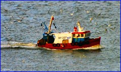 Scotland Greenock fishing trawler KY227 returning to port with it's catch of fish 14 November 2013 by Anne MacKay (Anne MacKay images of interest & wonder) Tags: scotland greenock fishing trawler ky227 14 2013 picture by anne mackay november