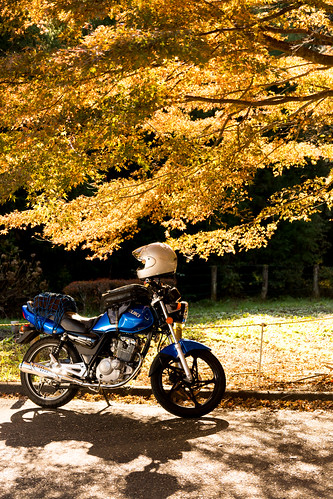 Motorcycle in the Autumn Leaves