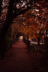 Tunnel of Red (roriethedinosour) Tags: autumn trees winter light red orange brown tree home nature fairytale fence dark leaf blood magic mother bikes tunnel ali fairy future portal welcome wonderland past leafs tale mothernature tunnle