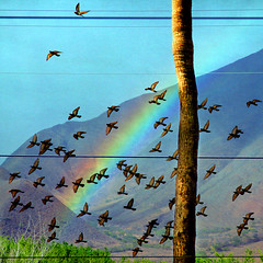 the rainbow's glory is shed (1crzqbn) Tags: sunlight color nature lines birds square landscape rainbow driveby palm textures 1crzqbn vision:outdoor=087 vision:sky=0605 fornelsonmandela rainbowsgloryisshed