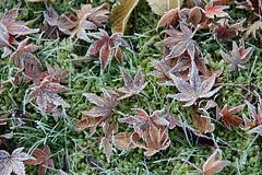 Frost (Yukkuriko) Tags: germany garden deutschland frost processed garten 庭 marl niedersachsen ドイツ 霜 bearbeitet lemförde